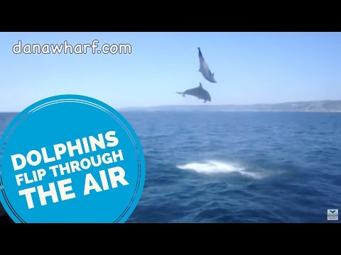 Dolphins flip for a little girl