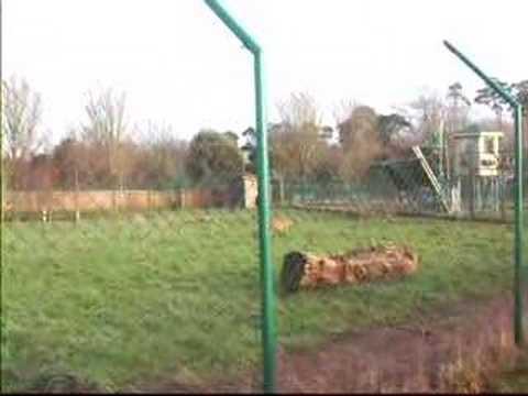 foto island ireland cork cheetah hunting 2