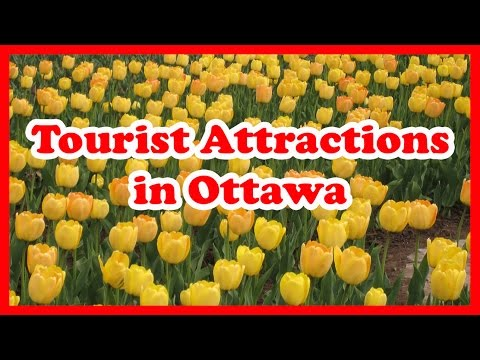 5 Top-Rated Tourist Attractions in Ottawa | Canada Travel Guide