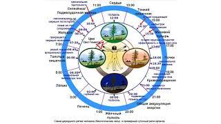 Сомнология, наука о сне (рассказывает сомнолог Василий Покровский)
