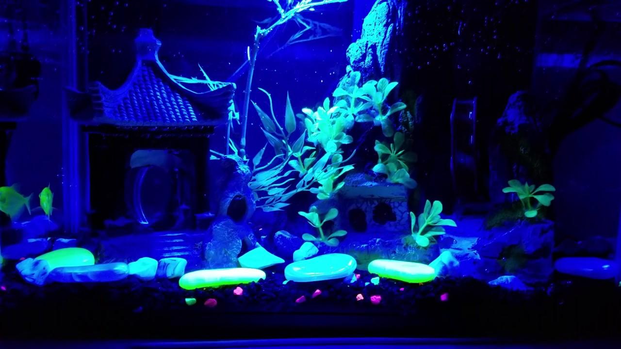 glofish tank setup