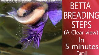 Betta breeding explained in 5 minutes completely (tamil)