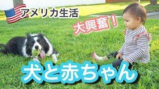 【犬と赤ちゃん】娘が大興奮!愛犬たちと遊ぶ様子♡ アメリカ生活|子育て|新米ママ|国際結婚 thumbnail