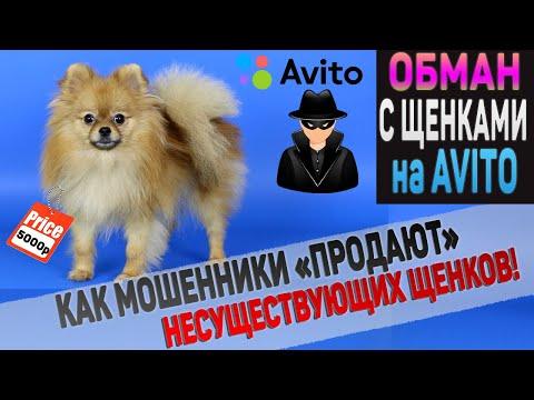 """Обман на АВИТО! Как мошенники """"продают"""" щенков и собак. Гениальная схема развода!"""