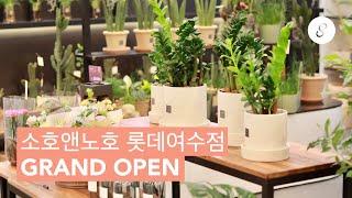 소호앤노호 롯데여수점 GRAND OPEN | 롯데마트 …