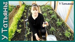 НАШАТЫРНЫЙ СПИРТ - как УДОБРЕНИЕ и от ВРЕДИТЕЛЕЙ для растений!