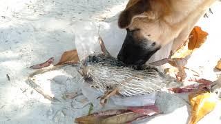 Вы не поверите! Что едят бездомные собаки в Таиланде?