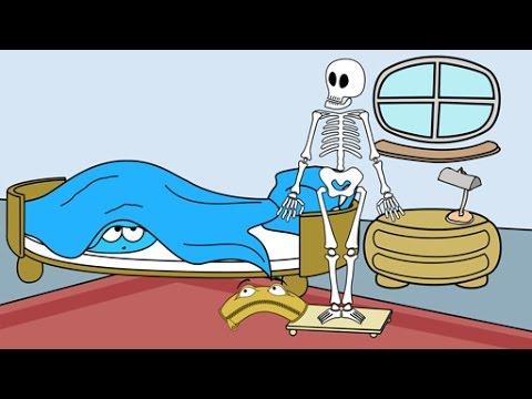 Skelett des Menschen - Schulfilm Sachkunde - YouTube