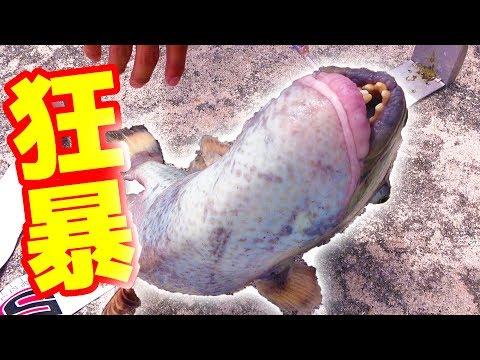 【注意】人の指を噛み千切ると噂の魚を釣り上げた!【石垣/鳩間島遠征#3】