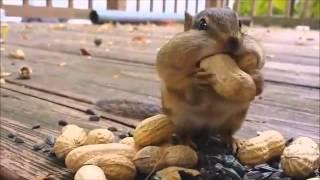 ピーナッツを頬張るリスを2〜3時間見ていたい・・・・。