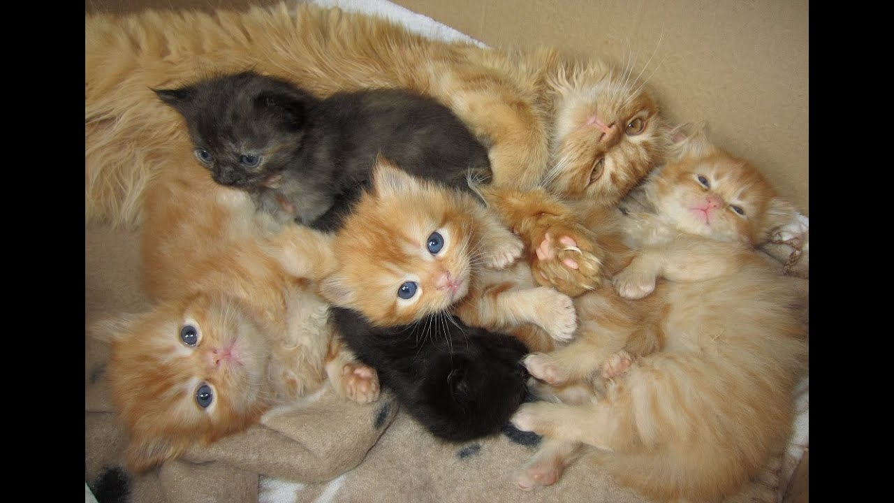 Baby Kittens And Their Big Brother Marmalade Youtube