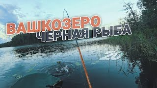 Риболовля на Вашкозеро з ночівлею. Чому чорна риба?