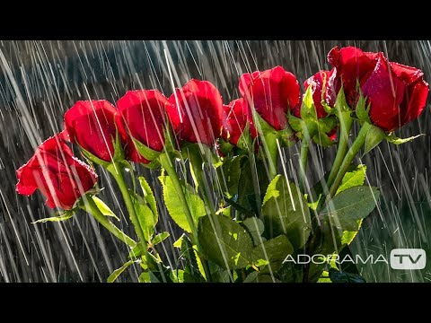 Flowers in the Rain: You Keep Shooting with Bryan Peterson