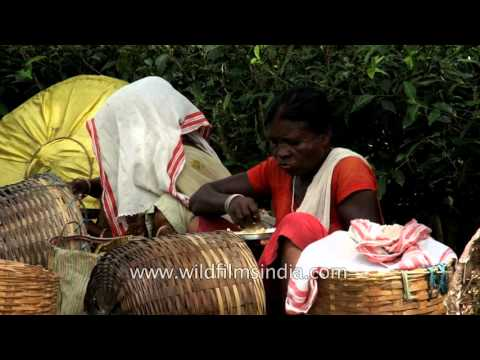 Assamese Women Tea Workers Eat Lunch At Tea Garden
