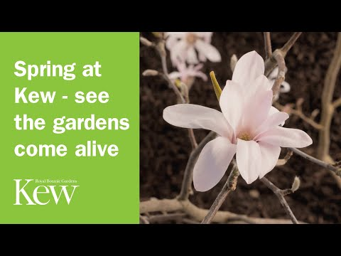 Spring at Kew - see the gardens come alive