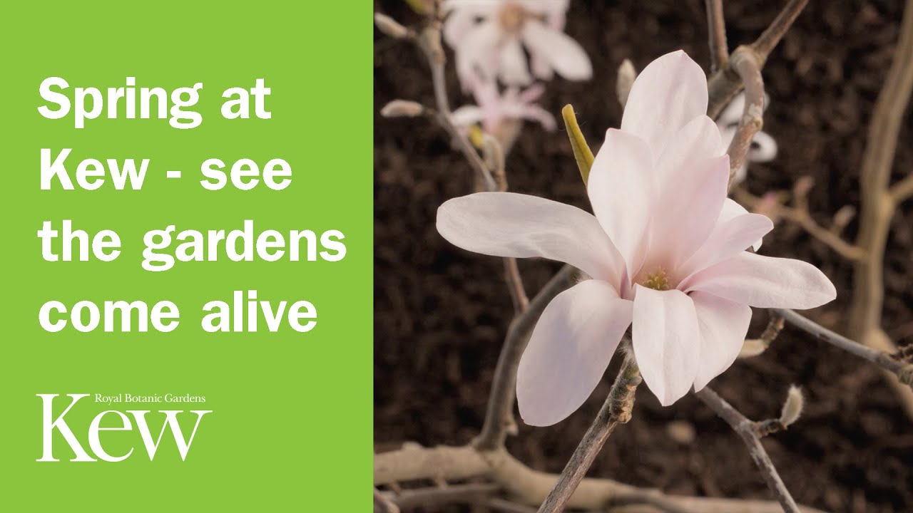spring gardens kew come alive