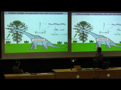 The foraging ecology of pterosaurs – implications from stable isotope analysis