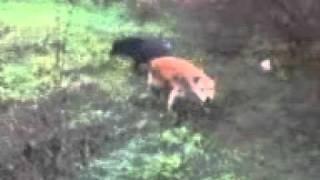 ПОРНО VLOG : Собака не лает на дядю фраера NEW HALLOWEEN посмотр