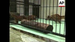 INDONESIA: ECONOMIC CRISIS TAKING ITS TOLL ON TIGER BREEDING CENTRE