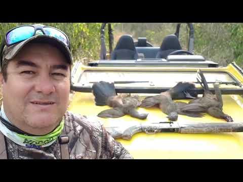 Ocellated Turkey Hunt Campeche México