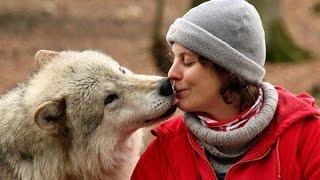 Между строк. Как волк стал лучшим другом человека