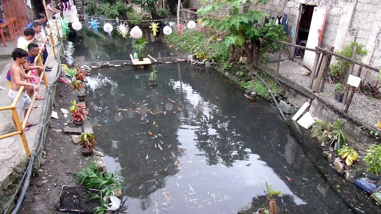 Baslayan koi pond street smart entrepreneurship in iligan for Starting a koi pond