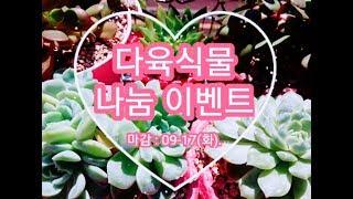 [황금정원 Golden Garden, 多肉植物, Succulent Plant] 다육식물 나눔 이벤트가 9월 …