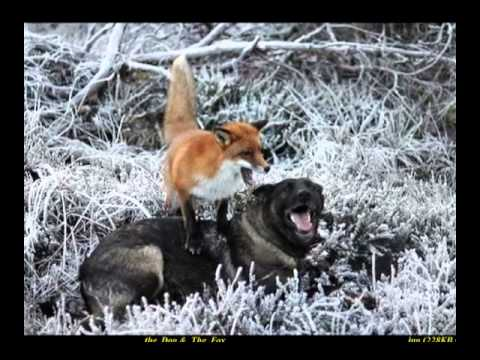 The Dog & The Fox         Ivan S Chin