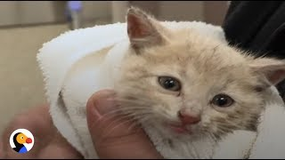 ADORABLE Kittens Rescued From Drain Pipe | The Dodo