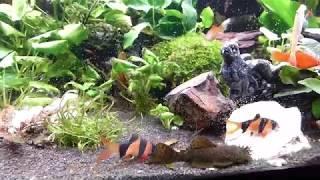 Ein 300 Liter Aquarium als Gesellschaftsbecken