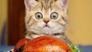 ПРИКОЛЫ 2016 Коты Приколы Смешные Животные Funny videos 2016 Самое лучшее!