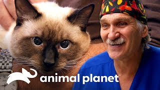 ¡Un domingo especial para gatos en la clínica! | Dr. Jeff, Veterinario | Animal Planet