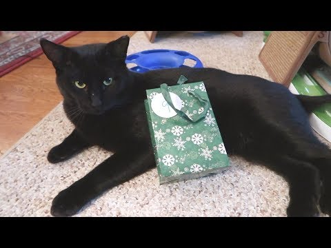 Boo Day 139 - Hello Christmas Tree - Training And Socializing A Feral Cat