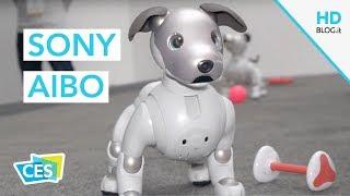 Sony AIBO, il ritorno del cane robotico | CES 2018