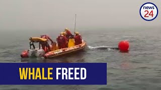 WATCH   SAWDN frees humpback whale from fishing rope in Lamberts Bay