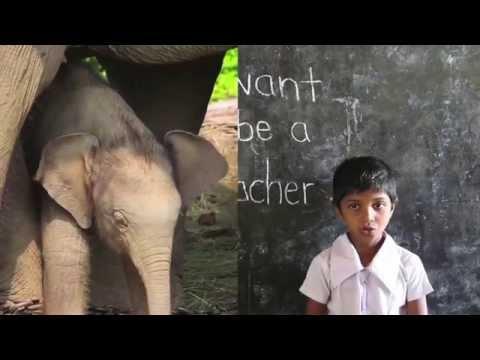 Help Save Elephants by Volunteering in Sri Lanka