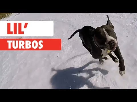 Lil Turbos
