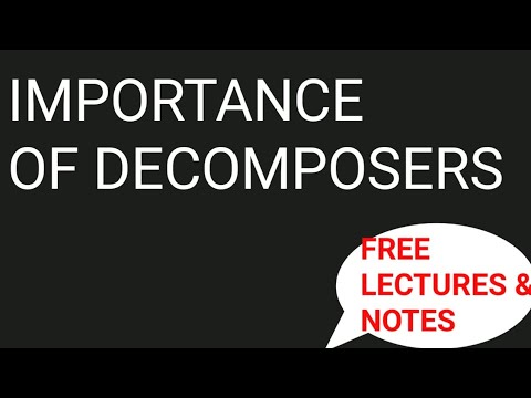 Importance Of Decomposers