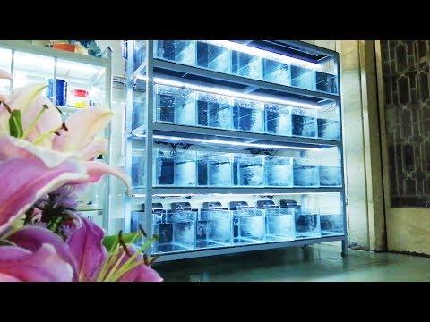 LỘT XÁC dàn hồ thanh lý giá rẻ |  Install filter system for guppy aquarium