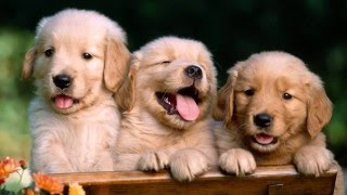 Маленькие милые щенки/ Фото щенков/Видео для детей!