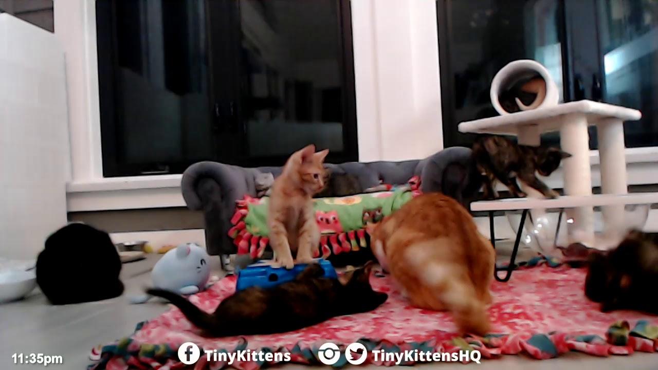Playtime with Chloe!  TinyKittens.com