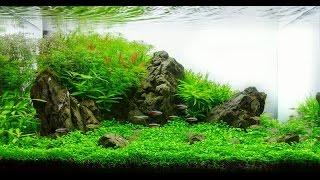 Уход за аквариумом для начинающих аквариумистов! Как ухаживать за аквариумом, рыбками, растениями!