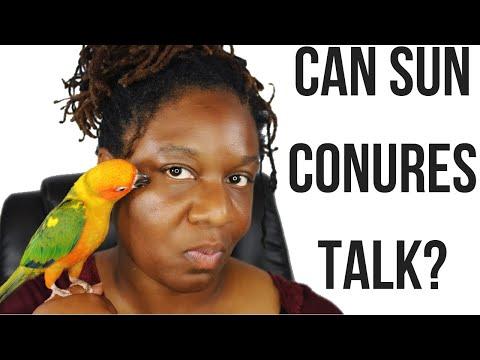 Can Sun Conures Talk????