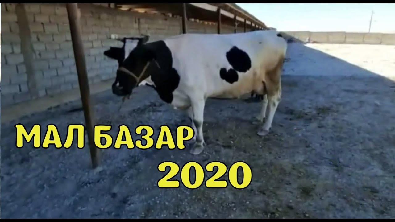 Мал Базар 2020 Жұма күні мал аз
