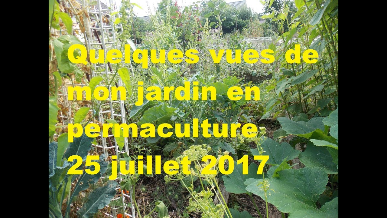 mon jardin en permaculture quelques vues le 25 juillet 2017 youtube. Black Bedroom Furniture Sets. Home Design Ideas