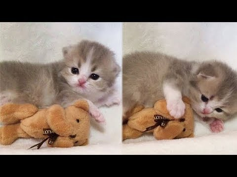 A Cute Cats and Kitten Funny compilation 2018