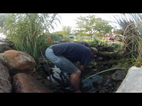 Ewing Irrigation  -- Pond Cleaning Time Lapse  -- Cedar Park Texas