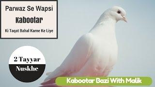 Kabootar Ki Taqat Bahal Karne Ke Liye 2 Tayyar Nuskhe By Kabootar Bazi With Malik