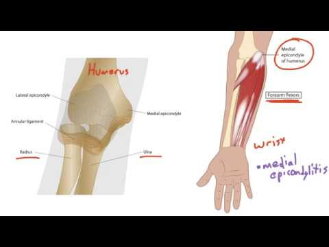 Musculoskeletal Anatomy for the USMLE Step 1 (elbow and ...