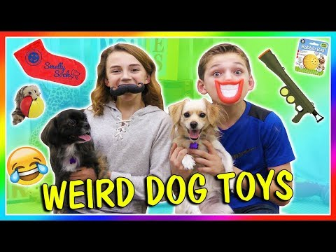 TESTING WEIRD DOG TOYS | We Are The Davises